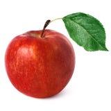 äpplered Arkivfoton