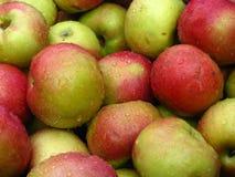 äppleskörd Arkivbild