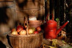 äppleskörd royaltyfri bild