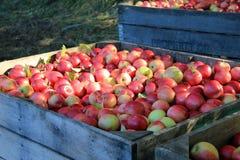 äpplespjällådor royaltyfria foton