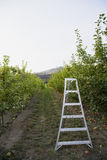 äpplestegefruktträdgård Royaltyfri Fotografi