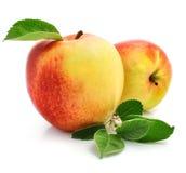 äpplet bär fruktt röda gröna leaves royaltyfri fotografi