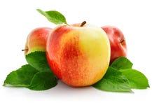 äpplet bär fruktt röda gröna leaves arkivbilder