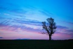 äpplet clouds treen för sunen för naturen för blommaliggandeängen Arkivfoto