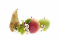 Äpplet och päronträdet - frukter som är nya med fatta av ett äppleträd i blom Royaltyfri Foto