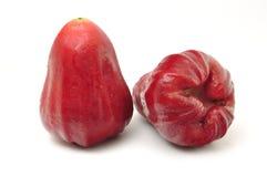äpplet steg Royaltyfri Bild