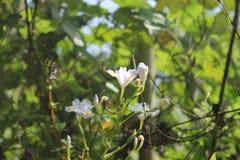äppleträdet blommar över vit arkivbilder