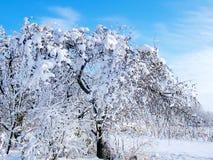Äppleträdet i snön Snöig trädgård Royaltyfria Bilder