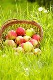 äppleträdgård Royaltyfri Bild