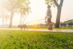 Är den blured tillbaka sikten för rörelse av unga flickan, kvinnor och att gå för hund Royaltyfri Foto