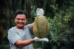 Är den hållande durianen för den asiatiska bonden en konung av frukt royaltyfri foto