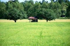 Är gröna risfält för landskap härliga Royaltyfri Fotografi