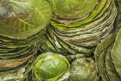 Är hemlagade gröna plattor av olika format från naturliga sidor i högar royaltyfri fotografi