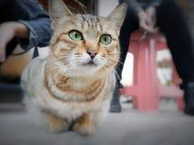 Är min katt gullig? arkivbild