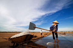 Är oidentifierade bönder att skörda som är salt Royaltyfri Foto