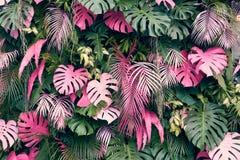 Är ordnad oavkortad bakgrund för tropiska träd eller den fulla väggen där sidor i olika format, olika färger, olika format, många Royaltyfri Bild