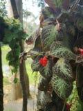 är röda blommor för dekorativ blomma naturlig skönhet arkivfoto