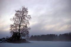 Är treen i dimmigt landskap Royaltyfri Fotografi