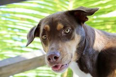 Är vem mer lycklig än mig? liv för hund` s Arkivbilder