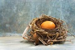 Ärgern Sie mit dem Nest des Vogels auf dem konkreten Boden morgens lizenzfreies stockbild