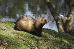 Ärgern Sie sich auf der Bank von einem Teich in Drenthe Lizenzfreie Stockbilder