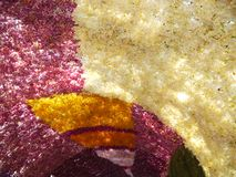 Ärke- orkidé Royaltyfri Fotografi