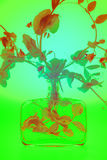 Ärtaväxt i flaska Royaltyfri Fotografi