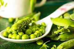 Ärtor Nya bio hemlagade ärtor och fröskidor på gammalt grönt bräde Sund ny grön grönsak - ärtor och fröskidor Royaltyfri Bild