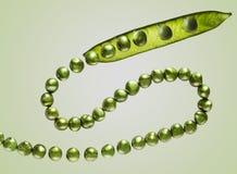 Ärtor och pärlor Royaltyfri Bild