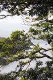 Äste und Niederlassungen an den Seen Stockfoto