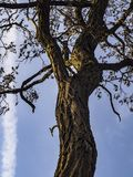Äste von Bäumen gegen den Himmel lizenzfreie stockbilder