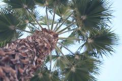 Ästhetischer Baum, flache Schärfentiefe, socal, Kanon, 80mm Lizenzfreie Stockfotografie