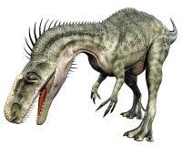 äta den främre monolophosaurussidan Royaltyfria Bilder