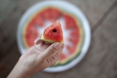 Äta den skivade vattenmelon arkivbild