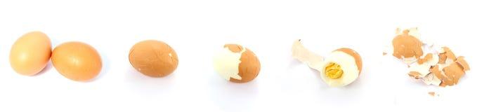Äta ett ägg royaltyfri foto
