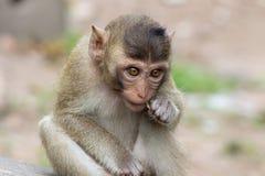Äta för apor arkivfoto