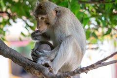 Äta för apor royaltyfri foto