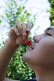 äta för Cherry Royaltyfri Bild