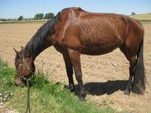 Äta för häst Arkivbilder