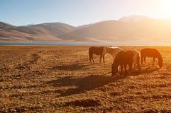 Äta för hästar Arkivbilder