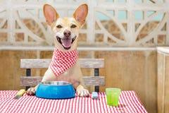 Äta för hund tabellen med matskålen royaltyfria foton