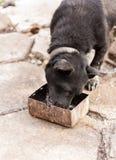 Äta för svart hund Arkivbilder