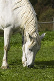 äta hästen royaltyfri bild