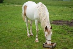 äta hästen Royaltyfri Fotografi