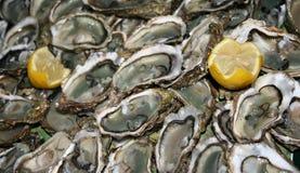 äta nya ostroner som är klara till Royaltyfria Bilder