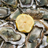 äta nya ostroner som är klara till Royaltyfri Bild