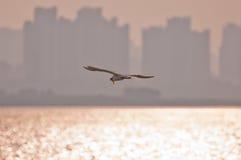 äta stor solnedgång för egretfisk Royaltyfria Bilder