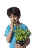 Äter årig pojke åtta basilikasidor Royaltyfria Bilder