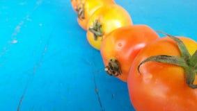 Äter den stora rundan för tomater mycket Arkivbild