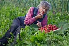 äter grannyjordgubbar Royaltyfri Bild